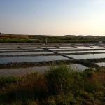 Marais salants (île de Ré)