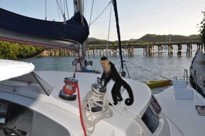 bateau singe tour du monde famille