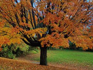 5 chouettes sorties avec les enfants en automne