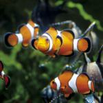 © www.aquarium-st-malo.com