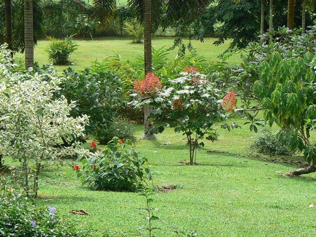 Le jardin botanique de coconi poussin voyageur for Jardin botanique hiver 2016