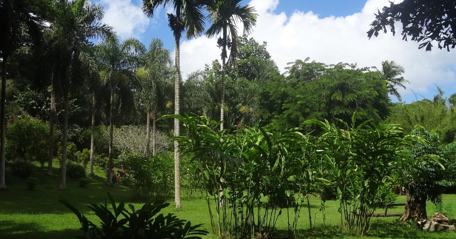 Le jardin botanique de coconi poussin voyageur for Le jardin botanique camping